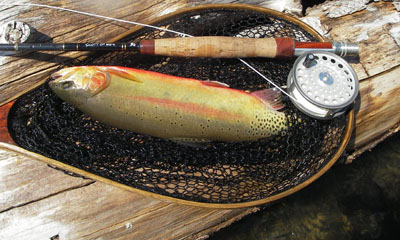 Golden trout, barnaby ridge lakes